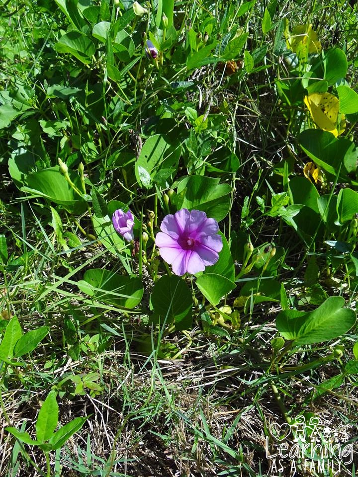 Purple Flower at Robinson Preserve
