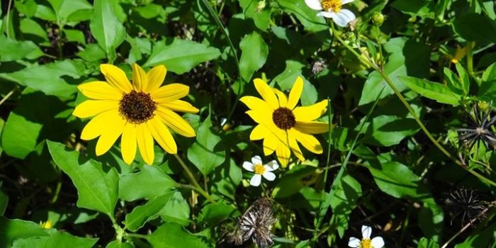 Photos of Nature in Robinson Preserve Bradenton Florida!