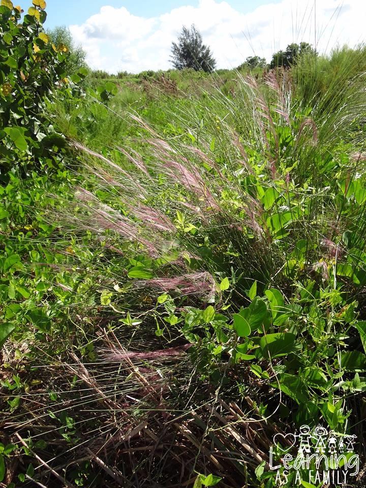 Wild Grasses in Robinson Preserve