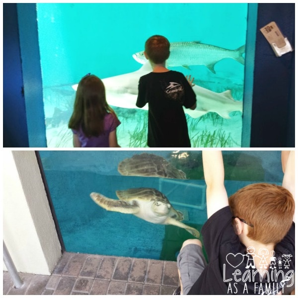 Fish, Sharks, and Sea Turtles at Mote