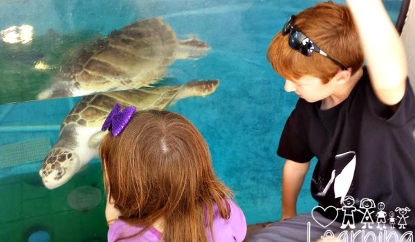 Family Visit To Mote Marine Laboratory and Aquarium in Sarasota and the OH BABY Exhibit!