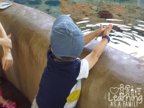 Touching Sea Life at Mote Marine