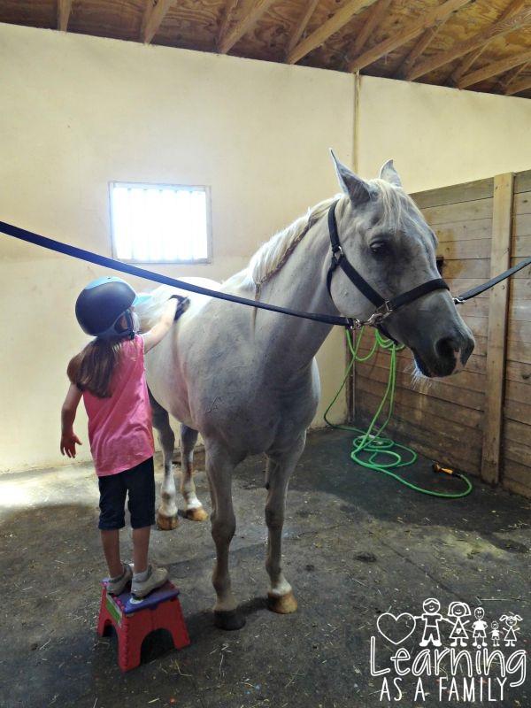 Grooming a Horse at Al-Marah Arabians Clermont, FL