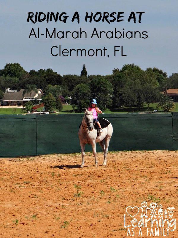 Riding a horse at Al-Marah Arabians Clermont, FL